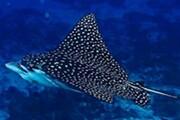 ماهیان غضروفی خلیج فارس در معرض خطر انقراض