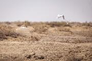 ۴۳ درصد مساحت تالابهای ایران تحت تاثیر غبارخیزی قرار دارد