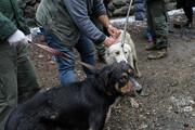 اجرای طرح زندهگیری سگهای ولگرد در بیرجند