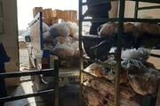 کشف ۲ تن گوشت فاسد از یک سردخانه در ساوه