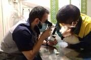 مردم با حیوانات مهربان شدهاند