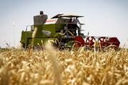 تولید ۵۴ هزار تن انواع غلات در خمین