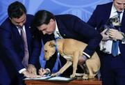عکس روز | امضای قانون حمایت از حیوانات