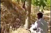 ویدئو | قطع درختان ۳۰ ساله گردو با دستور رئیس دادگستری خوانسار