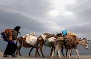 فیلمساز انگلیسی مستند کوچ عشایر بختیاری را میسازد