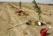 اجرای ۶۸ هزار هکتار جنگلکاری با بذر و نهال