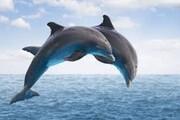 نهنگها و دلفینها در معرض خطر جدی و فوری انقراض