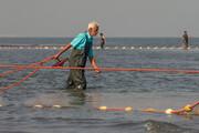 تصاویر | صید ماهیان استخوانی دریای خزر