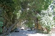 مهران «محله سبز» میشود