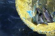 آغاز صید ماهی از دریاچه سد شهید کاظمی سقز