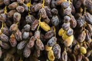 فرآوری خرما نیاز دشتستان