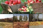 ماه تلخ سیب ایران | هدررفت سرمایه ملی یا انباشت بیتدبیری!