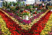 تولید ۳۹۷ میلیون واحد انواع گل در محلات