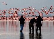 طرح جایگزین شکار پرندگان وحشی در استانهای شمالی تدوین میشود