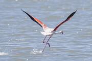 تراز آب دریاچه ارومیه به وضعیت ۲۵ سال قبل بازگشت