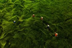 گزارش تصویری | برندگان جایزه عکاس هوایی سال ۲۰۲۰