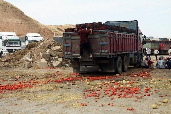 صادرات گوجه فرنگی
