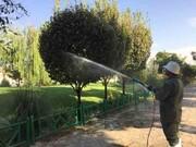 تغذیه متفاوت ۴۰ هزار اصله درخت