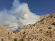کاهش ۵۰ درصدی وسعت آتشسوزی مراتع و باغهای زنجان
