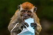 عکس روز | میمون و ماسک