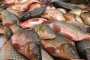 خداحافظی با ماهی شب عید | رشد ۲ برابری قیمت انواع ماهی