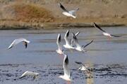 ورود ۳ هزار پرنده مهاجر به تالابهای آبدانان