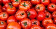 علت افزایش قیمت گوجه فرنگی اعلام شد