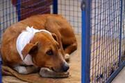 ۱۰ سال حبس برای حیوانآزاری در یونان