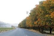 تصاویر   جلوه پاییزی کنگاور