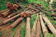 تأیید و تکذیب در ماجرای نقض طرح تنفس جنگل