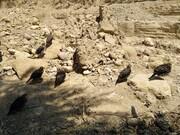 انجمن مردمی چشمه قدیمی منطقه هرمود را احیا کرد