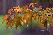هفته نخست آذر ۹۹؛ باران در راه است