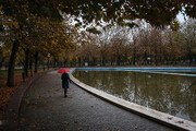 تصاویر   خزان برگها در بوستان ملت مشهد