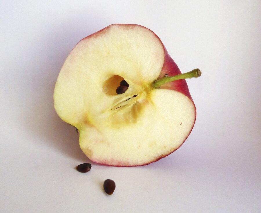 هسته سیب