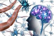 سلولهای ایمنی روده برای مقابله با ام اس تا مغز سفر میکنند
