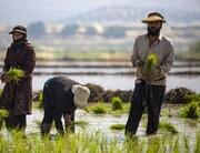 اجرای طرح گردشگری کشاورزی در مُهر مجوز گرفت
