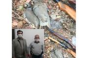 کشف و ضبط ۱۸ قبضه سلاح شکاری | دستگیری شکارچی قو در گلوگاه