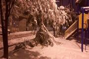 چالش درختتکانی در مهاباد با برف ۳۰ سانتی
