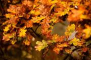 تغییرات اقلیمی به ریزش زودتر از موعد برگ درختان میانجامند