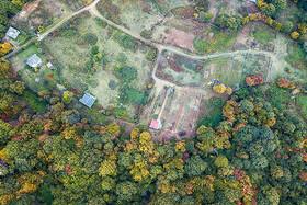 تصاویر | زمینخواری عجیب در جنگلهای شکتا