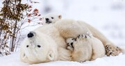 پخش یک مستند جدید حیات وحش از تلویزیون