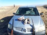 ۸ شکارچی متخلف در چالدران و شوط دستگیر شدند