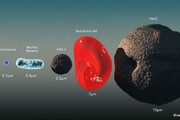 ابعاد ویروس کوچک کرونا در برابر سلولهای خونی و سیاره زمین