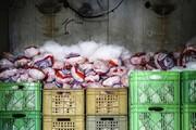 ۲۰ تن مرغ منجمد از محتکران در مهاباد کشف شد
