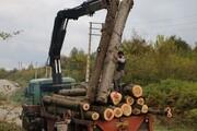 اختلاف بین منابع طبیعی و اوقاف | مالک درختان موقوفی اشدکت بابل کیست؟