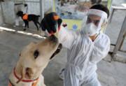 سگها بوی کروناویروس را حس میکنند! | علم چه میگوید؟