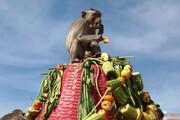 عکس روز| ضیافت میمونها