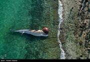دعوت از متخصصان محیط زیست برای بررسی علت مرگ نهنگها
