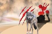 پیروزی جوان ساوهای در نبرد با گرگ وحشی