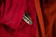 عکس روز| مار در ردای راهب